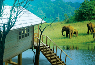 Wayanad  Luxury Resorts